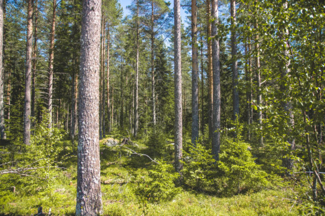 Mit dem Wohnmobil von Umeå nach Jokkmokk