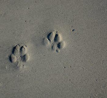 Vanlife mit Hund: Tipps für einen unvergesslichen Trip